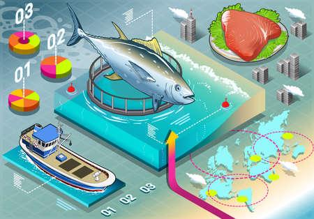atun rojo: Isométrico Infografía de cría de atún Vectores