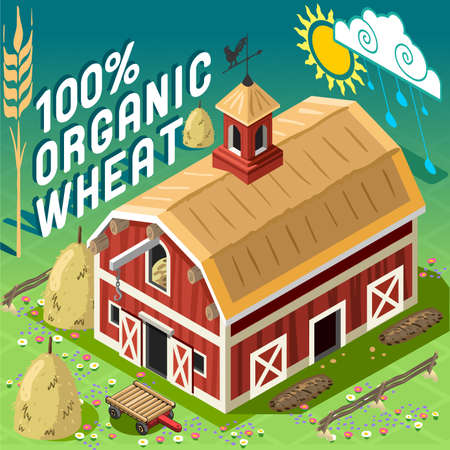 patio set: Isometric High Quality Farming 100 Organic Cereals. American Traditional Old Barn 3d Infographic Icon Vector Set. Rural Farm With Sheafs of Wheat.