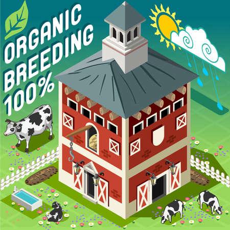 old barn: Isometrica di alta qualit� per animali 100 Organic. Americano tradizionale vecchia stalla Barn 3d Infographic set di icone vettoriali. Fattoria rurale con mucche. Vettoriali
