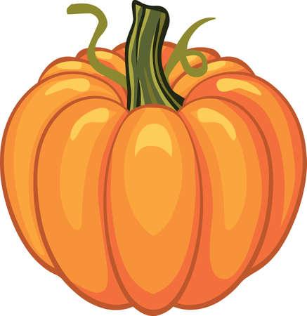 Pumpkin for  autumn  holiday