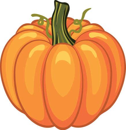 Pumpkin for autumn  holiday Illustration