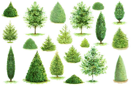 Trees illustration vector collection. Can be used to illustrate any nature or healthy lifestyle topic.