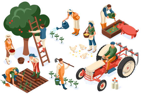 Flat tractor set. Farmer, agricultural worker with plant, chicken, sheep, rabbit, cow, milk, fruit or feeding farm animal. Harvest man with apple. Girl isometric images isolated on white background. Stock Illustratie