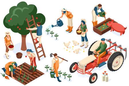 Płaski zestaw ciągników. Rolnik, robotnik rolny z rośliną, kurczakiem, owcą, królikiem, krową, mlekiem, owocami lub karmieniem zwierząt gospodarskich. Człowiek żniwa z jabłkiem. Dziewczyna izometryczne obrazy na białym tle. Ilustracje wektorowe