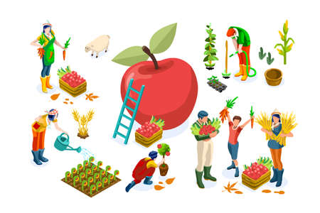 Men on happy farm work smiling on harvest and working on seasonal farms of apples. Happy agriculture of autumn fruits, people with garden fruits, agricultural season. Harvest flat vector illustration.