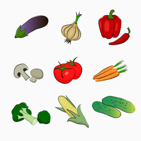 carrots isolated: Drawing isolated vegetables. Eggplant, onions, peppers, champignons, tomatoes, carrots, broccoli, corn, cucumber.