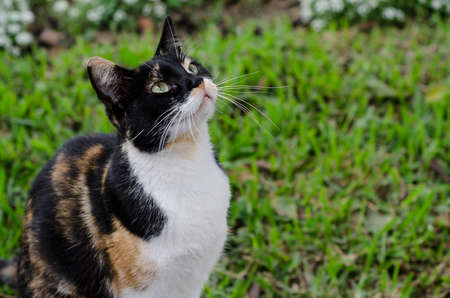 calico whiskers: Portrait of a calico cat in grass