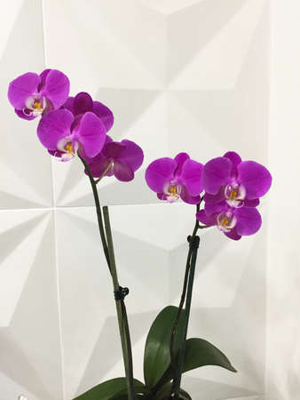 Purple orchids lit brightly against a white background. Фото со стока