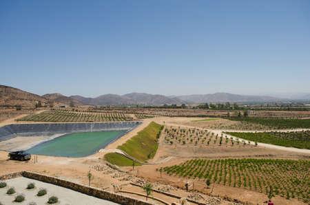 ENSENADA, BAJA CALIFÓRNIA, MÉXICO 21 DE MARÇO DE 2015: Vista de um vinhedo em Valle de Guadalupe. Ensenada, Baja California, MÃ © xico. 90% do vinho do México vem desta região