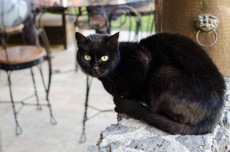 Black cat portrait. Curious black cat sitting on a enclosing wall