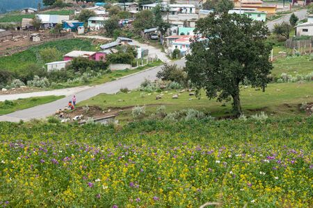 Landscape with yellow and purple flowers, a tree and houses at El Conejo, Perote, Veracruz, Mexico