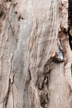 Wooden Texture Background. Cropped Shot Of A Textured Background. Tree texture. Stok Fotoğraf