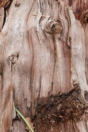 Wooden Texture Background. Shot Of A Textured Background. Tree texture.