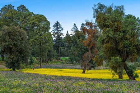 Beautiful mountain landscape with purple and yellow flowers, trees and vivid blue sky. Stok Fotoğraf