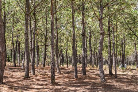 Trees in forest landscape at a sunny day. Forest landscape at summer day