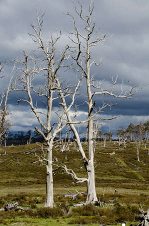 barren: Barren trees in winter