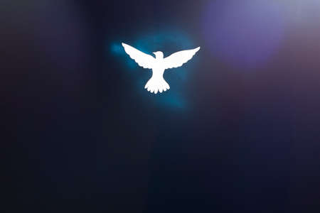 White dove silhouette on dark background with blue and purple light flares. Pentecost Sunday concept.