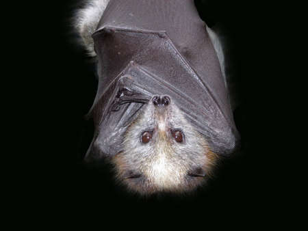 bats: bat