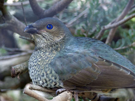 catbird: catbird Stock Photo