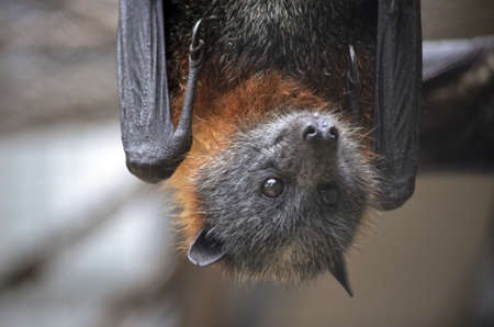 this is a close up of a bat Stock Photo - 11528218