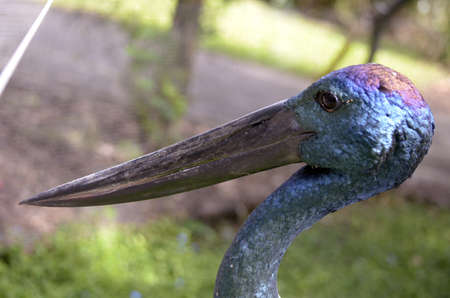 necked: this is a close up of a blue necked stork