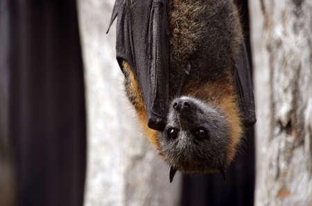 이건 박쥐 거꾸로 매달려있다.