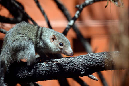 this is a side view of a tree shrew