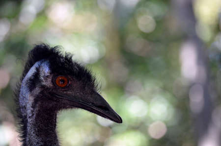hairy closeup: this is a close up of an emu