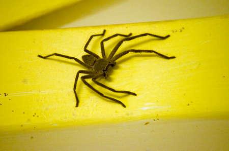 crawly: the huntsman spiderwas crawling on a yellow girder