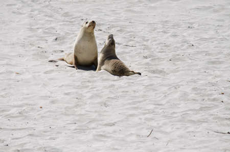 pups: the two sealion pups meet on the beach