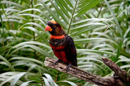 the dusky lory is sitting among the ferns Stock Photo - 81370821