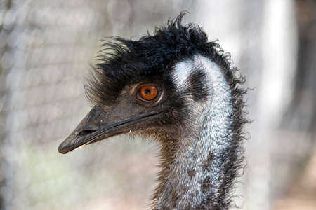 this is a close up of an emu