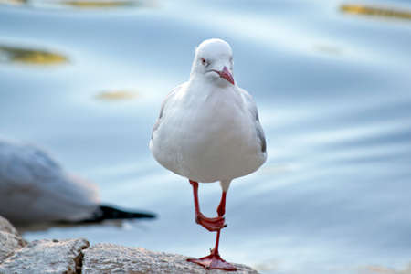 the seagull is standing on a rock