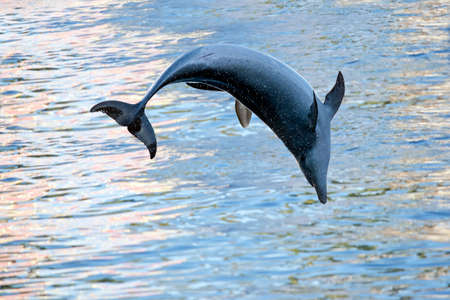 the dolphin has jumped out of the water Stock Photo