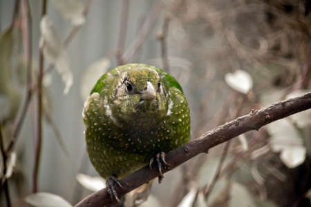 this is a close up of a green catbird Stock Photo