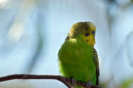 dit is een close-up van een parakeet Stockfoto