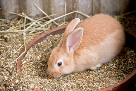 this is a side view of a rabbit