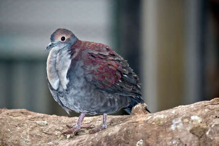 the pigeon is perched on wood