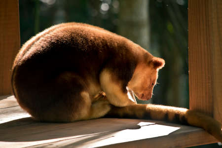 this is a side view of a tree kangaroo