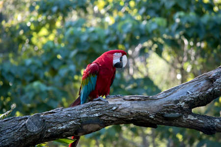 this is a side view of a scarlet macaw