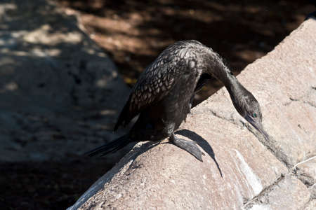 this is a side view of a shag