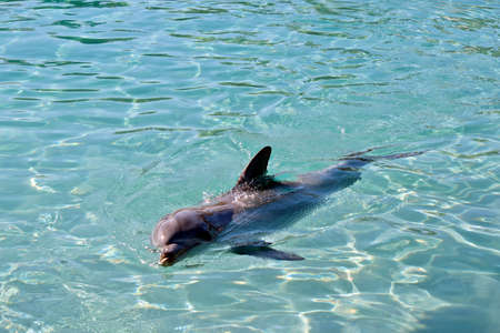 the bottlenose dolphin is swimming on its side