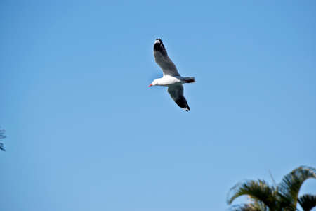 the seagull is flying high in the sky