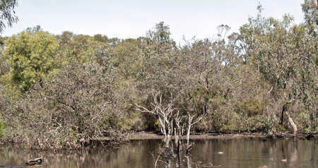 this is a lake on kangaroo Island full of wildlife Imagens