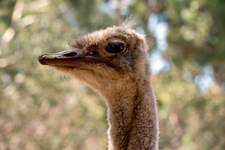 this is a close up of an ostrich side view Stok Fotoğraf