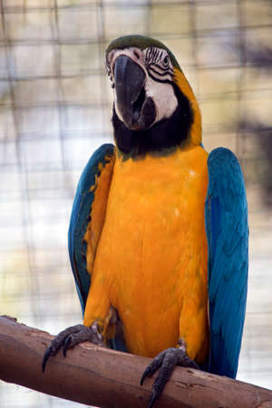 this is a close up of a blue and gold macaw Stok Fotoğraf