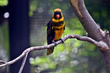 the dusky lory is perched a tree branch