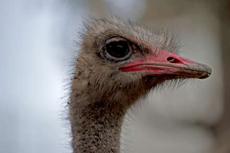 this is a side view of an ostrich