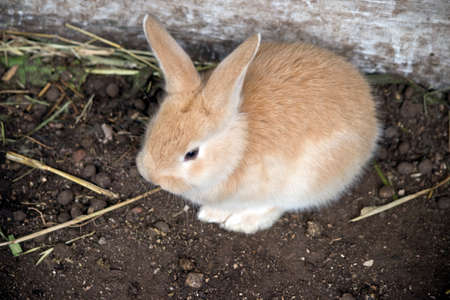 the baby hare is called a leverets, this one is next to a log