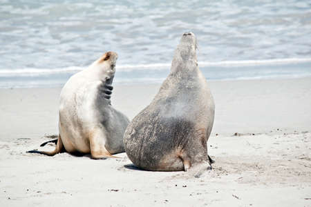 the sea lions are drying off on the beach